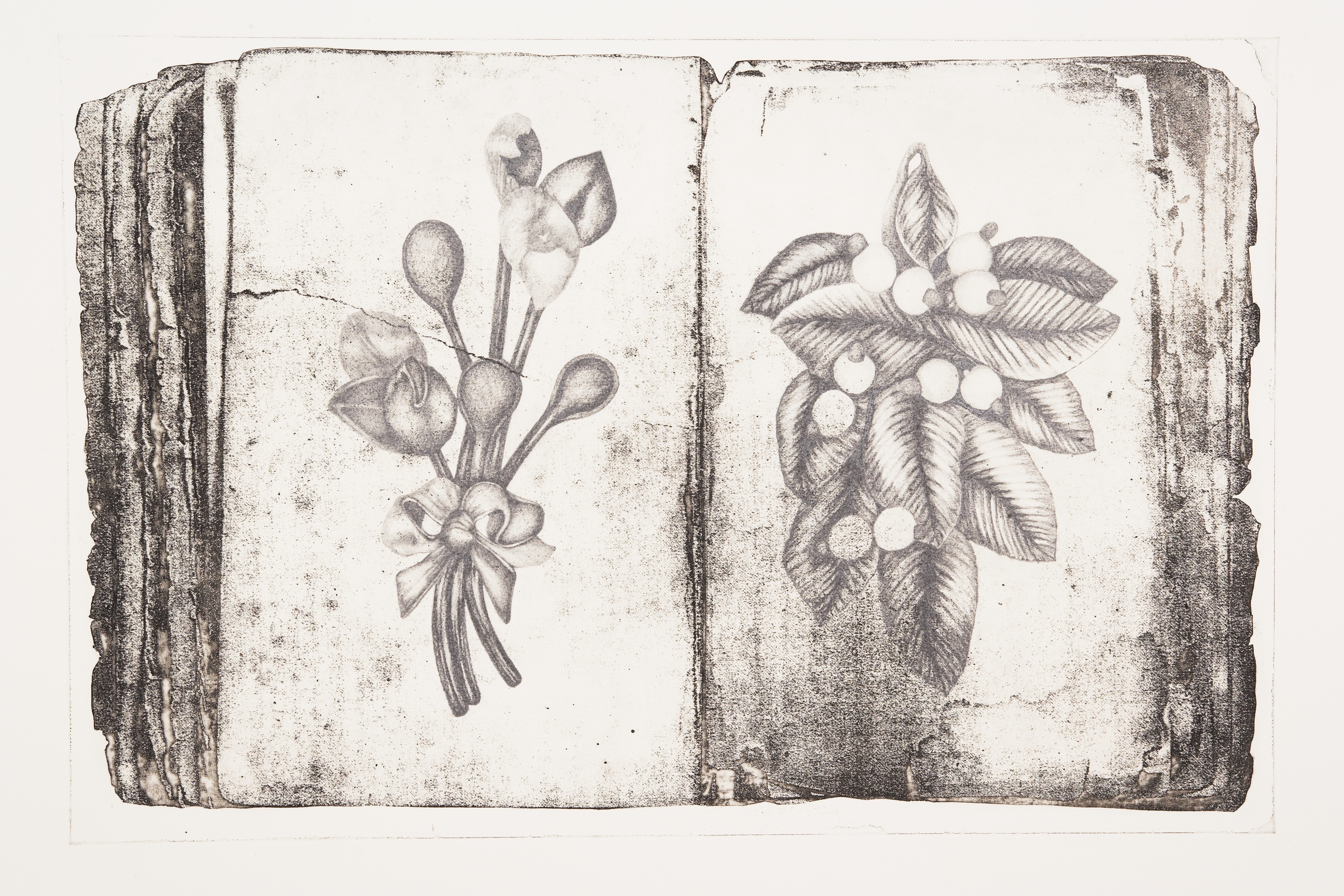 Jane Buyers' Chronicles #8 is a brown-grey etching of an open book displaying a fine-detailed botanical drawing