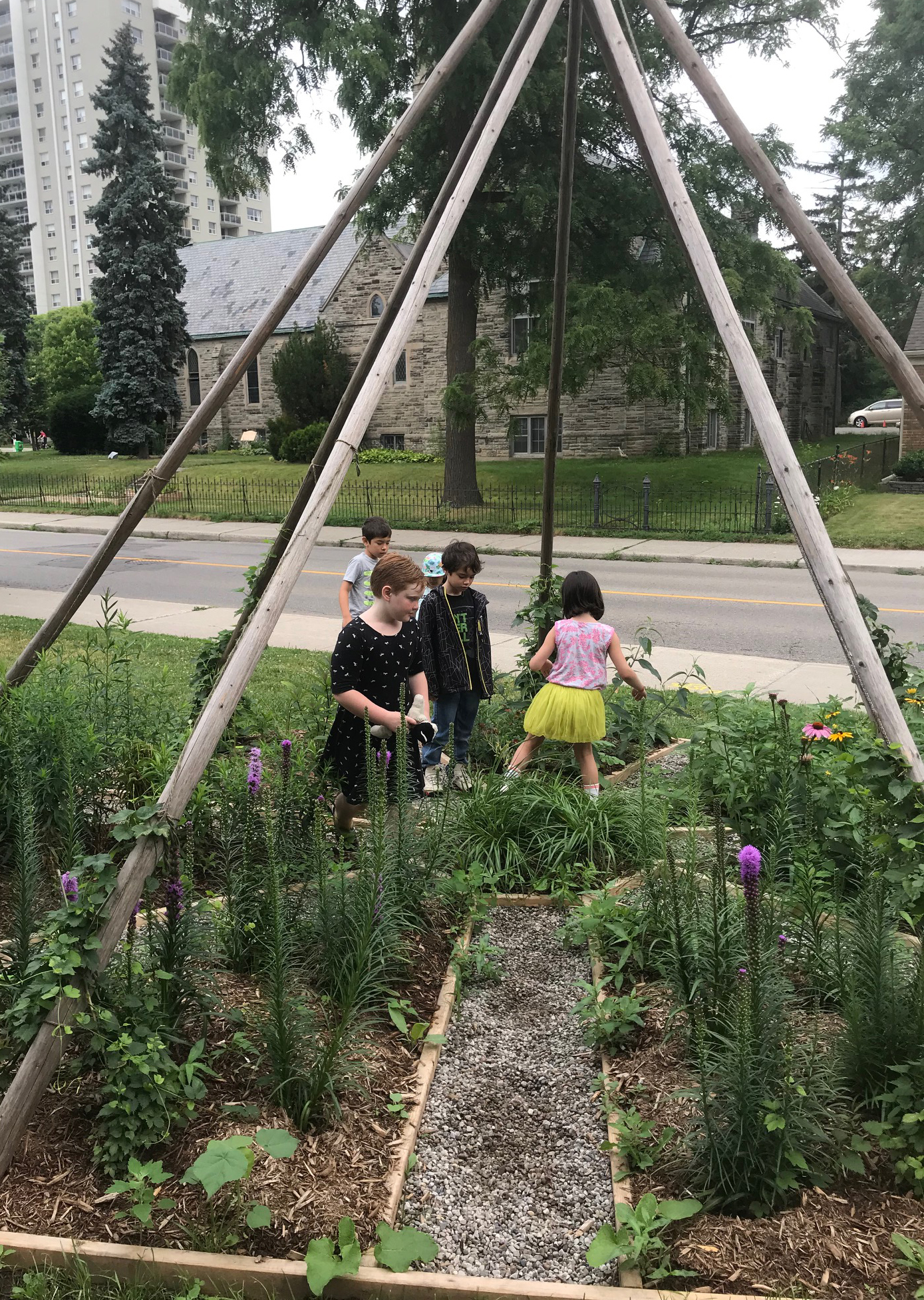 A small group of children standing on the pathways that intersect a medicine and butterfly garden growing beneath tall tipi poles in a green space adjoining an urban street
