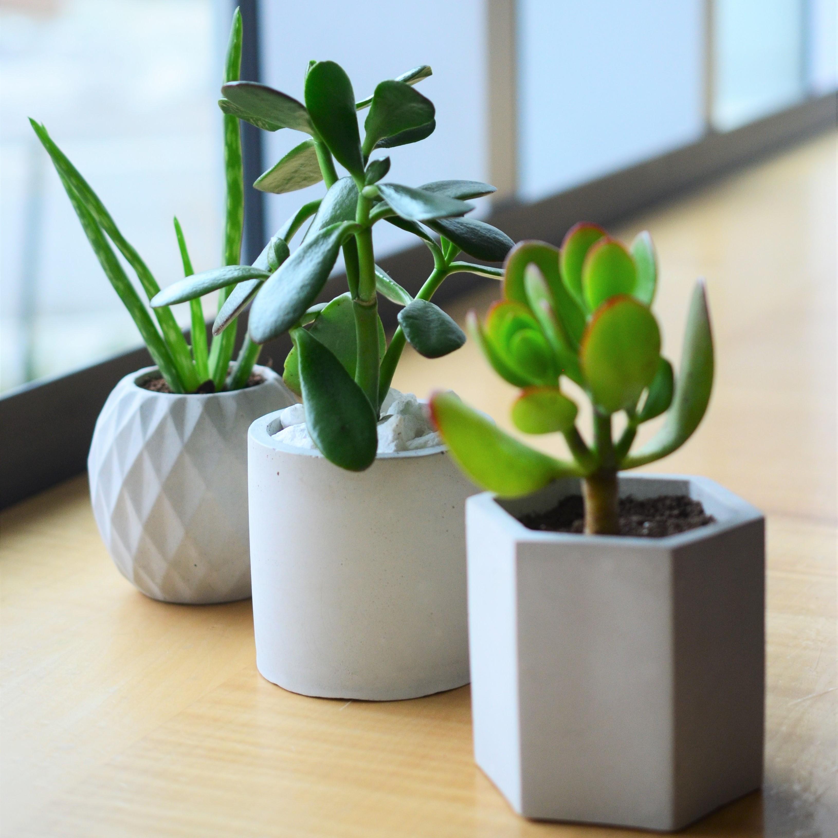Photo of three geometric concrete planters, each holding a bright green succulent plant, set on a windowsill
