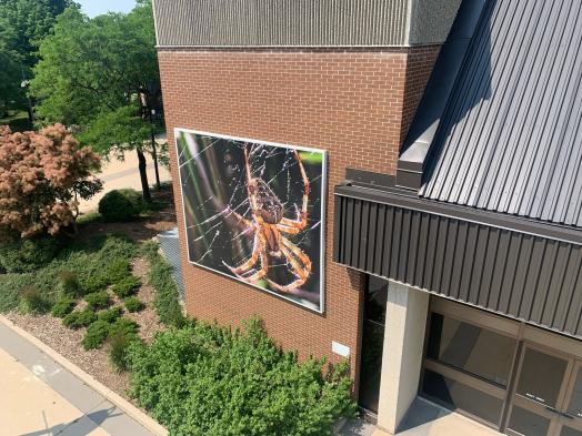 Aerial photo of a large digital banner of a red spider spinning a web, installed on a large brick wall of Centre In The Square
